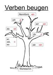 Verbenbaum - Anschauungsmaterial