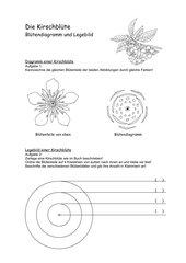 Kirschblüte - Diagramm und Legebild