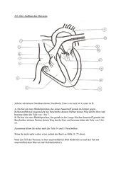 AB zum Herzaufbau
