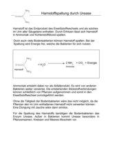 Versuche mit Urease zum Einstieg in die Enzymatik