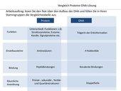 Vergleich Protein-DNA