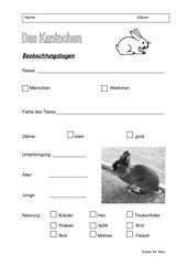 Haustiere: Kaninchen