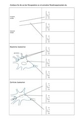 Arbeitsblatt Verrechnung an  Synapsen