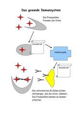 einfaches Schema - Immunsystem (Virusabwehr)