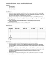 Modellexperiment Mendelsche Regeln