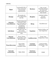Domino Ökosystem