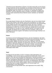 Tintenfisch - Arbeitsblatt