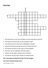 Kreuzworträtsel  zum Auge des Menschen