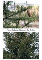 Zweige und Zapfen (Fotos)