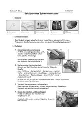 Anleitung Sektion eines Schweineherzens