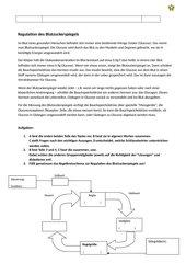 Regulation des Blutzuckerspiegels - binnendifferenziert