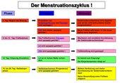 Folie / Arbeitsblatt Menstruationszyklus
