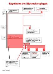 Einfaches Erklärungsmodell zur Regulation des Blutzuckerspiegels