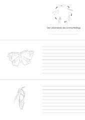 Lebenskreis der Schmetterlinge