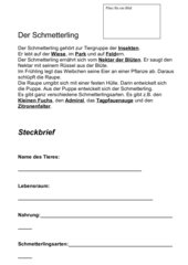Schmetterling-Steckbrief