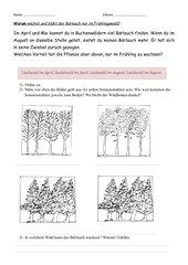 Warum wächst der Bärlauch nur im Frühlingswald