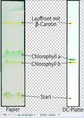 Extraktion und Chromatographie von Blattfarbstoffen