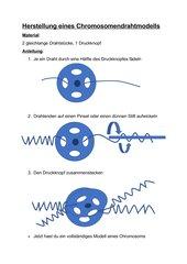 Chromosomendrahtmodell