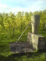 Weinkiepe - Weinbau, Fass, Wein, Skulptur, Stein, Bearbeitung, Kiepe, Weinlese, Ernte