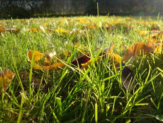 Wiese im Herbst - Gras, Herbst, Laub, Zersetzung