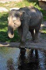 Elefantenbad # 2 - Elefant, Dickhäuter, Säugetier, Rüssel, Pflanzenfresser, grau, baden, Bad, Wasser