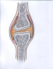 Gelenkaufbau - Knochenhaut, Gelenkkopf, Knorpel, Gelenkspalt mit Gelenkschmiere, Gelenkpfanne, Gelenkkapsel