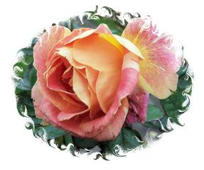 Verblühende Rose #2, Effektbild - Rose, Herbst, verblüht, Blume, Blüte, Grußkarte, Gruß, Effektbild
