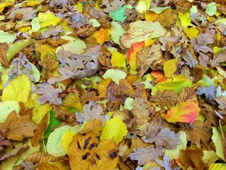 Herbstlaub - Herbstlaub, Laub, Blätter, Herbst, Farben, Herbstfarben, Natur, Verfärbung, gelb, rot, braun, orange