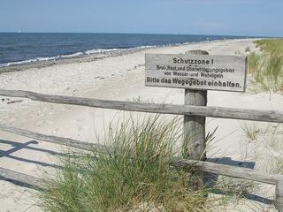 Brutgebiet/ Strand - Strand, Brutgebiet, Möwe, Vögel