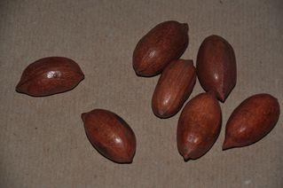 Pekannüsse - Pekannuss, Nuss, Kern, knacken, Anlaut N, Fettsäure, Omega-3, Walnussgewächs, sieben