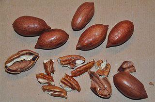 Pekannüsse - Pekannuss, Nuss, Kern, knacken, Anlaut N, Fettsäure, Omega-3, Walnussgewächs