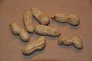 Erdnüsse - Erdnuss, Hülsenfrucht, Schmetterlingsblütler, Aschantinuss, Arachisnuss, Kamerunnuss, sieben