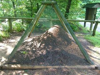 Ameisen - Ameisen, Ameisenvolk, Waldbewohner, Ameisenhaufen, Ameise, Gewimmel, fleißig, klein, emsig, viele, schleppen, krabbeln, Wald