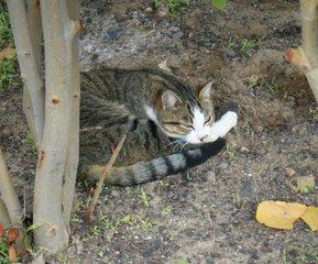 Katze beim Ausruhen - Katze, entspannen, Entspannung, Haustier