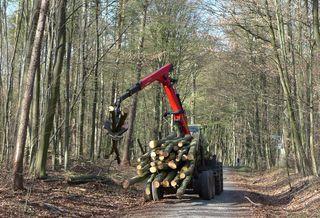 Waldarbeit  - Holz, schlichten, schichten, Holzstoß, Brennholz, Holznutzung, Forstwirtschaft, Wald, Feuerholz, Holztransport, Nutzholz, Waldarbeit, Kran, Greifer, Schwerpunkt