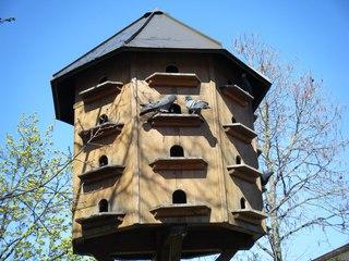 Taubenhaus#2 - Taubenhaus, Tabenschlag, Haustauben, Taubenzucht