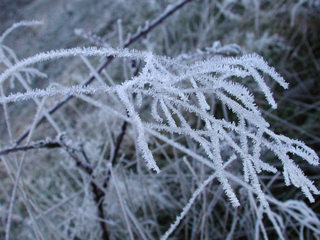 Zweige mit Eis - Zweige, Eis, Winter, kalt, Raureif, Kristalle, Eisnadeln