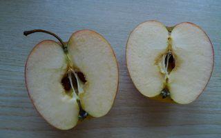 Kerngehäuse #1 - Apfel, Frucht, Makro, Kerngehäuse, Samen, Samenkern, Kern, Apfelkern