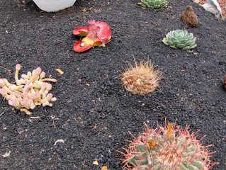 Kanaren: Picón - Boden, Erde, Lava, Lavagestein, Speicher, Feuchtigkeit, Tau, Kanarische Inseln