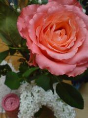 Zum Muttertag... - Natur, Pflanzen, Blumen, Rosen, Stillleben, Farben uvm.