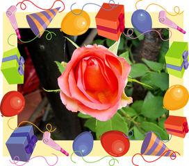 Eine Rose - Rose, Effektbild, Blume, Blüte, Geburtstag