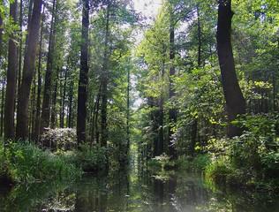 Spreewald1 - Spreewald, Spree, Wasser, Baum, Bäume, Ufer, Flussaue, Auwald, Ruhe, Wald, Meditation, Stille, Spiegelung, Fließ, Fließe