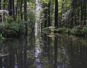 Spreewald 2 - Spreewald, Spree, Wasser, Wald, Baum, Bäume, Baumstumpf, Auenlandschaft, Flussaue, Auwald, Meditation, Ruhe, Stille, Spiegelung, Fließ, Fließe