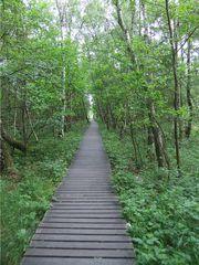 Wege # 1 - Weg, Steg, Holz, Holzweg, Moor, Perspektive, Erzählanlass, gerade, Meditation, Fluchtpunkt