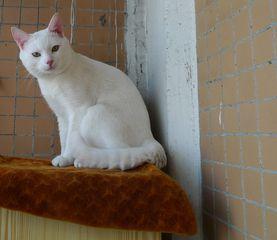 Katze 01 - Kater, Katze, Haustier, Säugetier, Schreibanlass