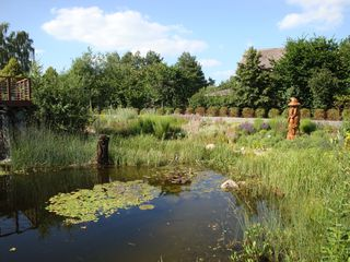 Teichbiotop#2 - Teich, Biotop, Wasser