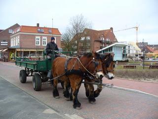 Juist - Pferde, Transport, Juist, Insel, Nordsee, autofrei, Anhänger, Pferdeanhänger, Fuhrwerk, Zugpferd, Pferd