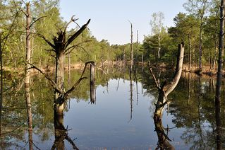 Pietzmoor # 3 - Moor, Pietzmoor, Schneverdingen, Lüneburger Heide, Landschaft, Landschaftsform, Hochmoor, Feuchtgebiet, Wasser, Sumpf, Naturschutzgebiet, renaturiert, feucht, nass