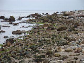 Seetangalarm - Algen, Plage, Strand, Ostsee, Umwelt, Probleme, Umweltprobleme, Seetang, Strandgut