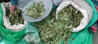 hojas de coca - coca, mercado, mate de coca, alimentos, hierbas